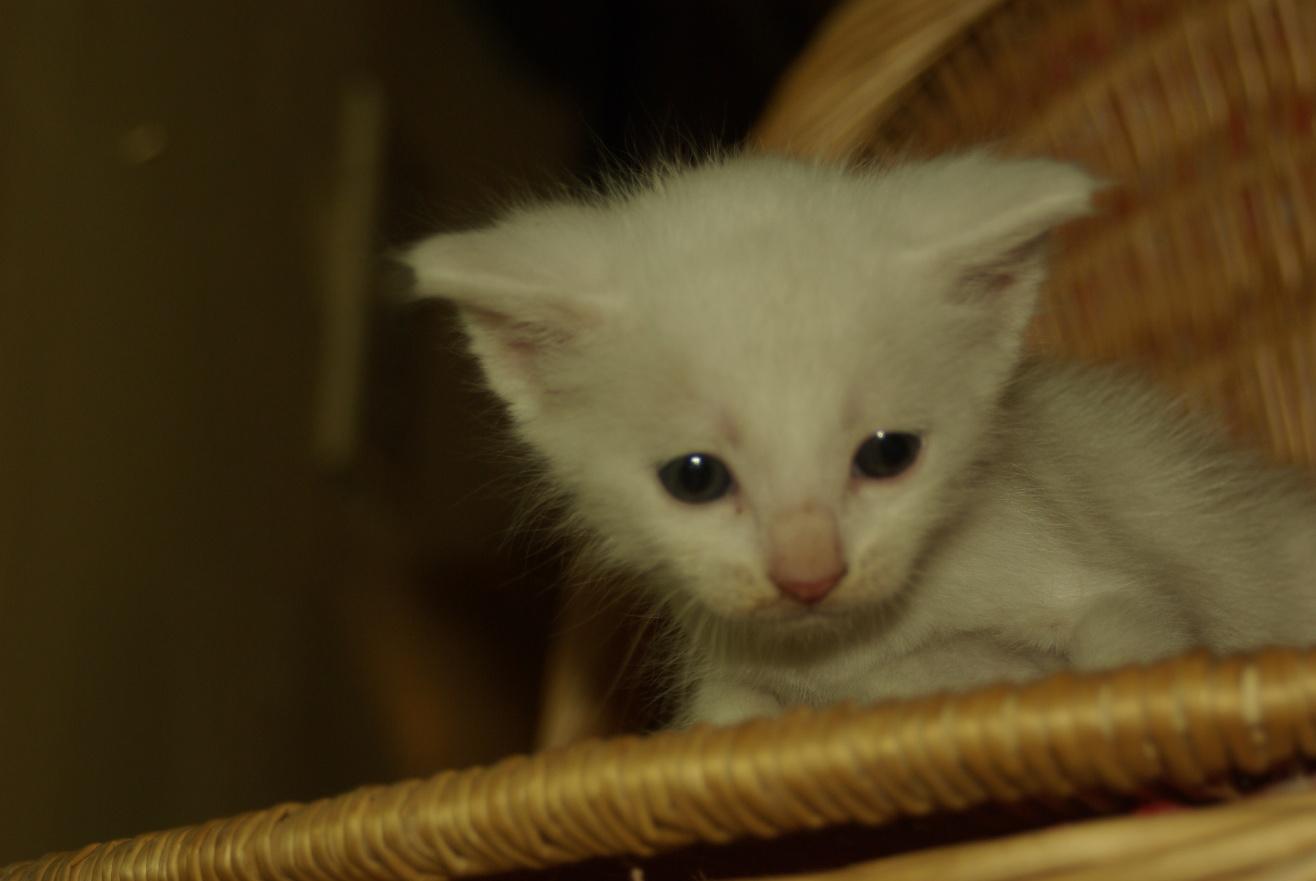 Really Cute Kitty